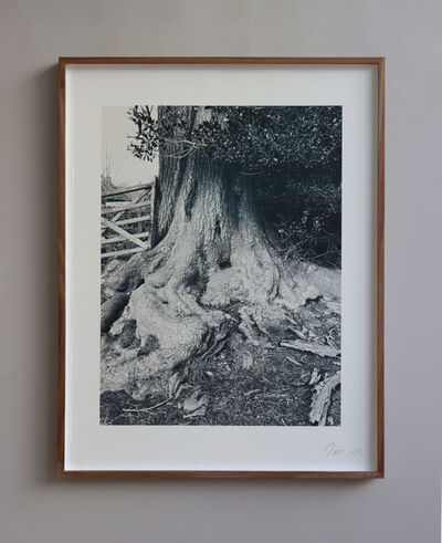 Deborah Tarr, 'Roots, Moreton Hall, Cheshire', 2019