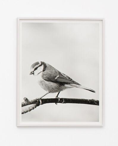 Jonas Dahlberg, 'Bird', 2015