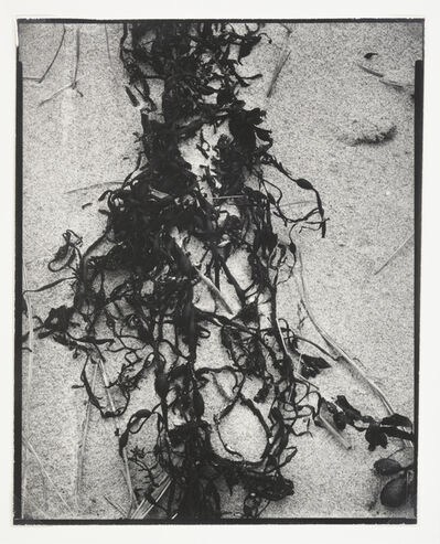 Paul Strand, 'Dried Seaweed, New England', 1946