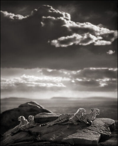 Nick Brandt, 'Cheetah & Cubs Lying on Rock, Serengeti', 2007