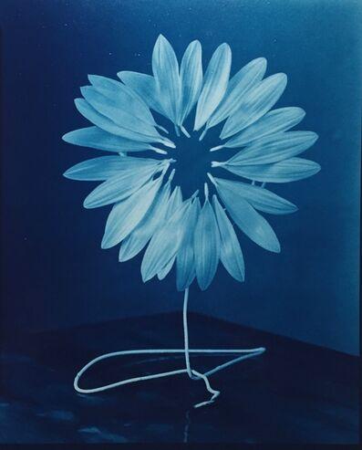 Robert Langham III, 'Re-Bloomed Sunflower', 2021