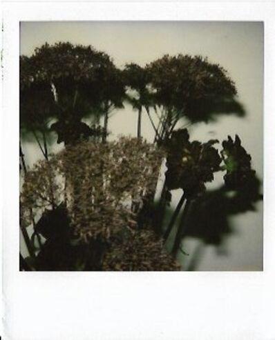 Nobuyoshi Araki, 'Untitled', 2006-2009