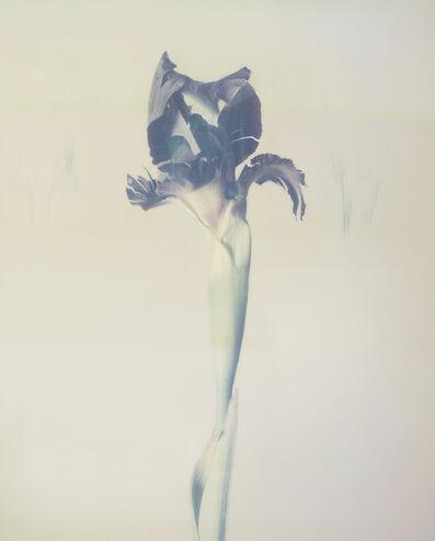 Ori Gersht, 'Iris atropurpurea P02', 2018