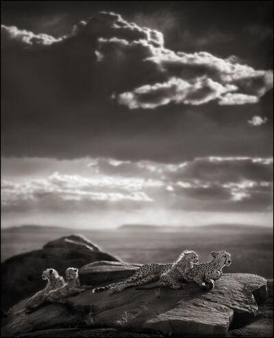 Nick Brandt, 'Cheetah & Cubs Lying on Rock, Serengeti', 2007