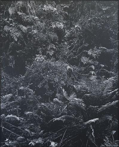 Peter Eastman, 'Undergrowth II', 2017
