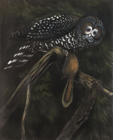 Tony Angell, 'Capture Spotted Owl', 2021