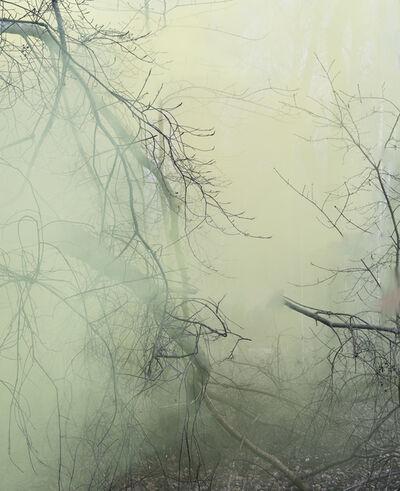 Sandra Kantanen, 'Forest 3', 2016