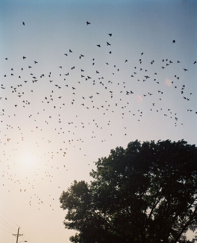 Gregory Halpern, 'Starlings, Omaha, NE', 2005-2018