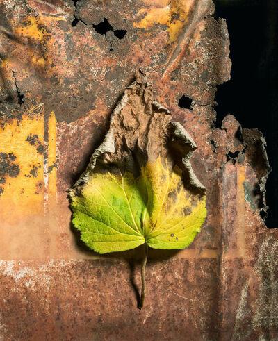 Jo Whaley, 'Leaf', 2016