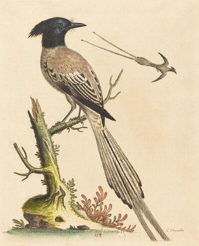 George Edwards, 'The Black and White Crested Bird of Paradise', published 1743