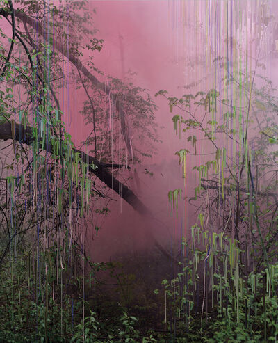 Sandra Kantanen, 'Untitled (Forest 17)', 2019