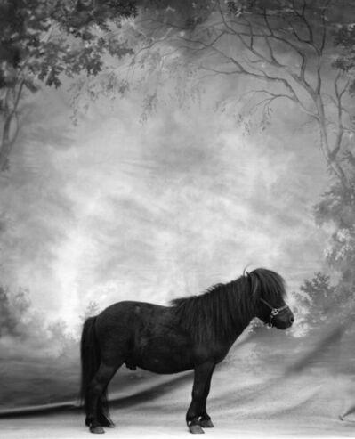 Sheila Rock, 'Horse #39'
