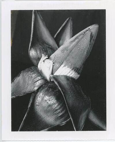 Gian Paolo Barbieri, 'Banana, Seychelles', 2003