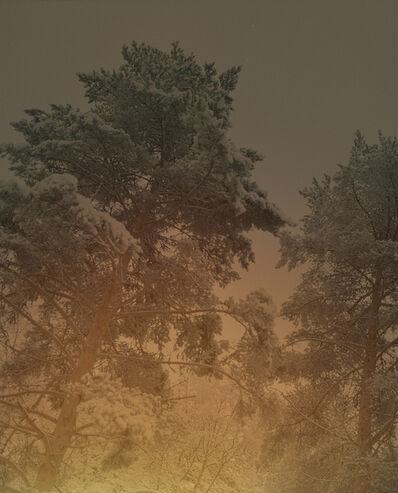 Maja Daniels, 'Winter Tree', 2016