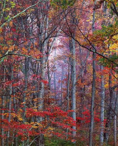 Christopher Burkett, 'Glowing Autumn Forest, Virginia', 2000