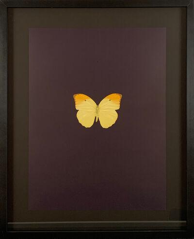Damien Hirst, 'Six Butterflies IV', 2011