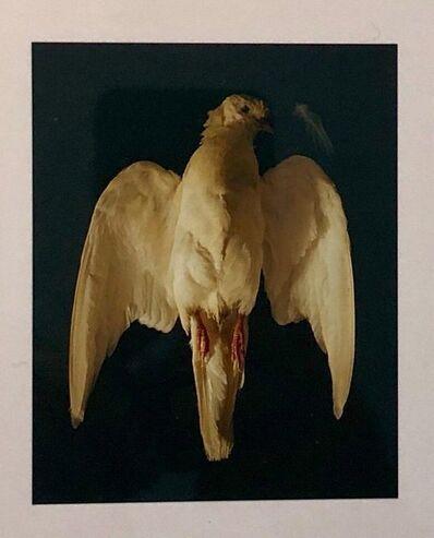 Brenda Zlamany, 'Birds, Cibachrome Photograph Print, Signed Conceptual Art', 1990-1999