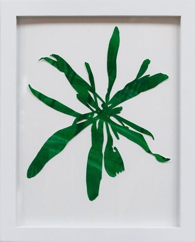 Hannah Cole, 'Untitled Green Weed #1', 2018