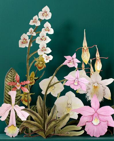 Teresa Currea, 'Orchid Garden', 2019