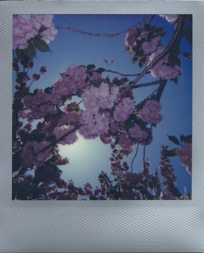 """Ellen Stagg, '""""Cherry Blossoms 2""""', 2018"""