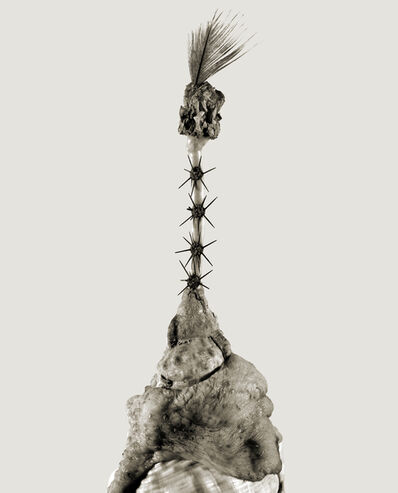 Joan Fontcuberta, 'Aspergia', 1984