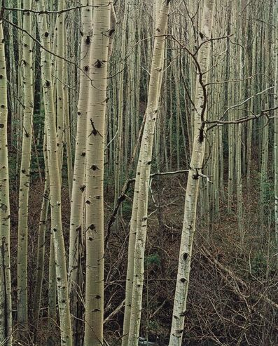 Eliot Porter, 'Portfolio One: The Seasons (nine photographs)', 1963