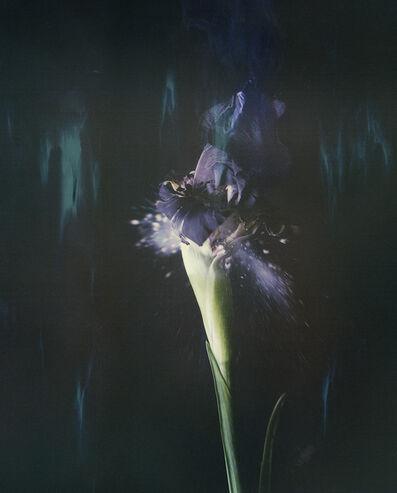 Ori Gersht, 'Iris atropurpurea P05', 2018
