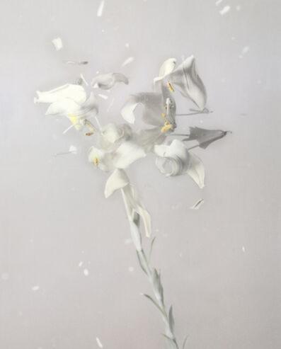 Ori Gersht, 'Lilum candidum P01', 2018