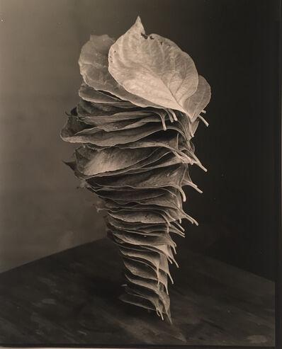 Robert Langham III, 'Fallen Stacked Dogwood Leaves', 2016