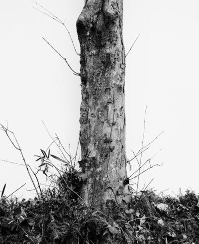 Daichi Koda, '(back)ground 04', 2019