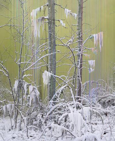 Sandra Kantanen, 'Untitled (Forest 7)', 2017