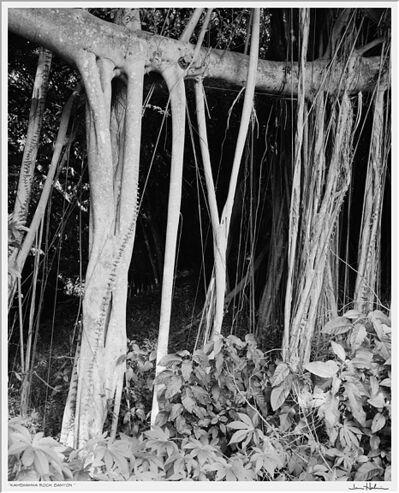 Jerome Hawkins, 'Kamehamha Rock Banyon', 2007