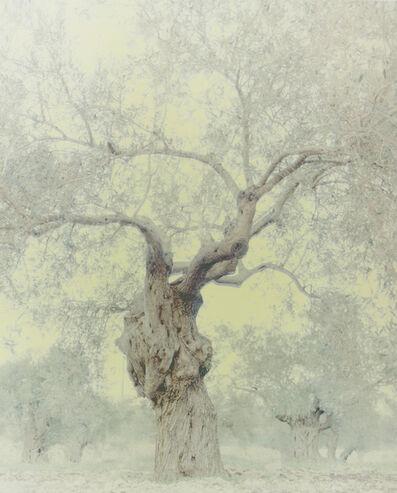 Ori Gersht, 'Olive 18', 2004