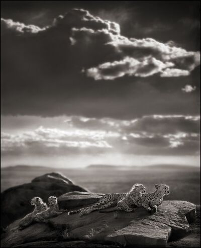 Nick Brandt, 'Cheetah & Cubs Lying on Rock, Serengeti 2007', 2007