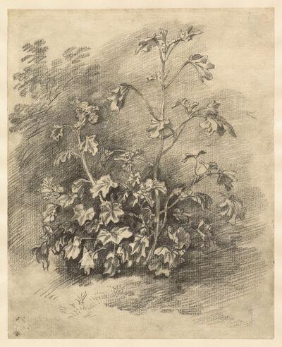 Thomas Gainsborough, 'Study of Mallows', Mid-to late 1750s
