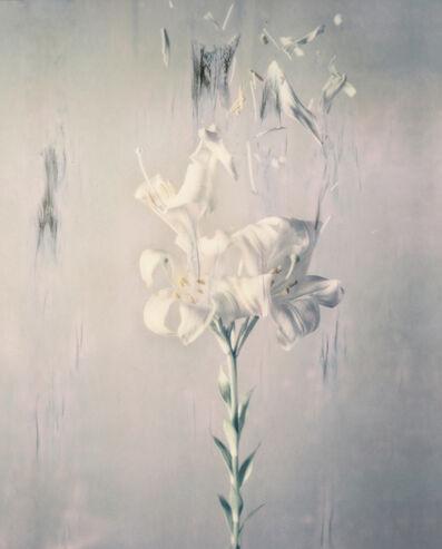 Ori Gersht, 'Lilium candidum P02', 2018