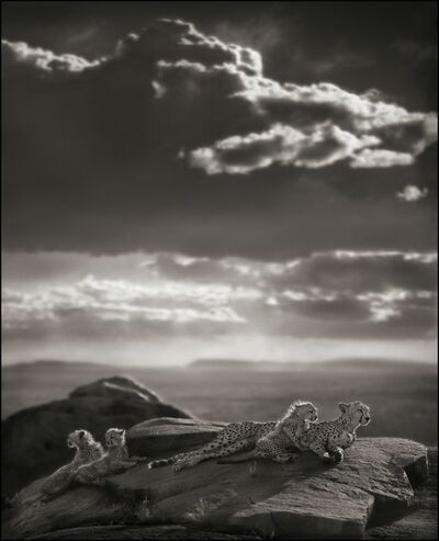 Nick Brandt, 'Cheetah And Cubs Lying On Rock, Serengeti', 2007