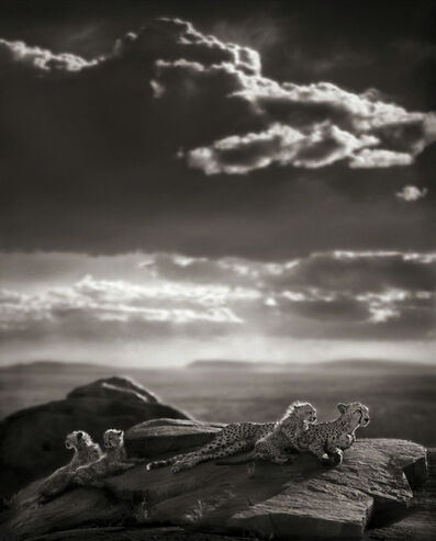 Nick Brandt, 'Cheetah & Cubs Lying on Rock', 2007