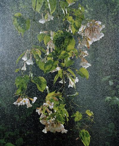 Sanna Kannisto, 'Transient rain', 2010