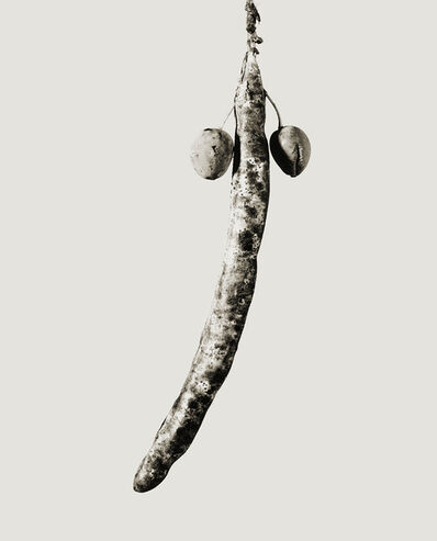 Joan Fontcuberta, 'Astropithus dicotiledoneus', 1984