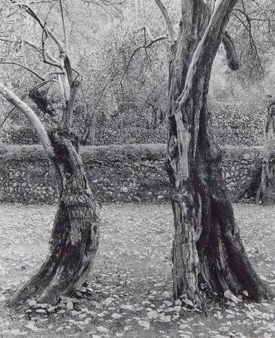 Ellen Auerbach, 'Dancing trees, Mallorca', 1950