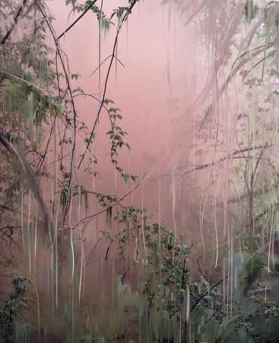 Sandra Kantanen, 'Untitled (Forest 18)', 2019