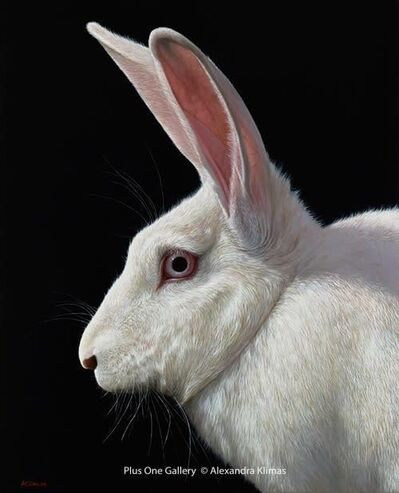 Alexandra Klimas, 'Snowy the Rabbit I', 2018