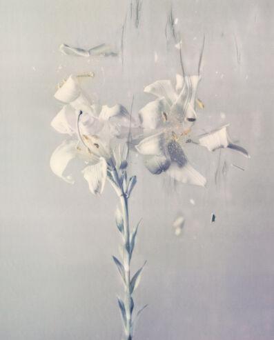 Ori Gersht, 'Lilium candidum P03', 2018