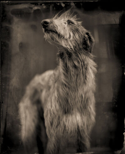 Keith Carter, 'Bog Dog', 2014