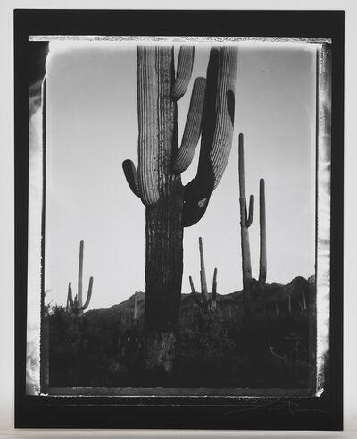 Lara Porzak, 'Saguaros',  2002