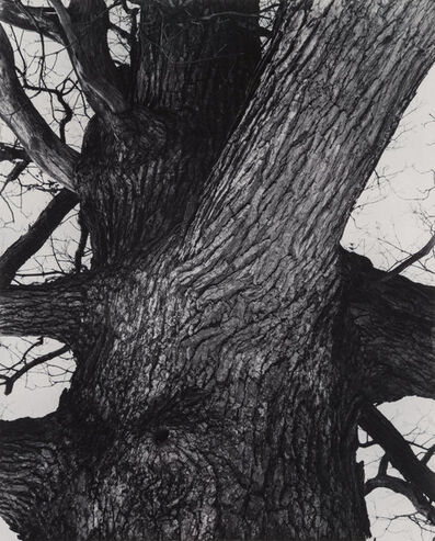 Edward Steichen, 'Venerable Tree Trunk', 1932-printed in 1982