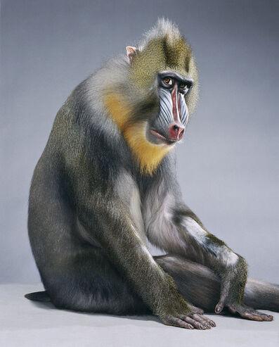 Jill Greenberg, 'Monkey Suit', 2005