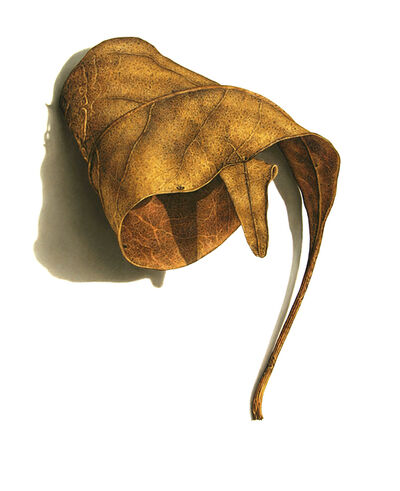 David Morrison, 'Rusted Leaf Series No. 3', 2006