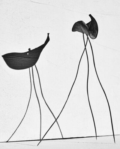 Txema Yeste, 'Study of Balance', 2019